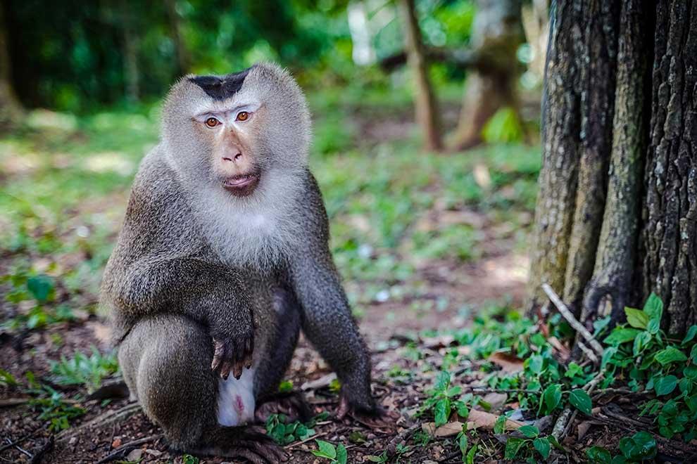 owłosiona małpa wielki czarny kutas kurwa białe pisklęta
